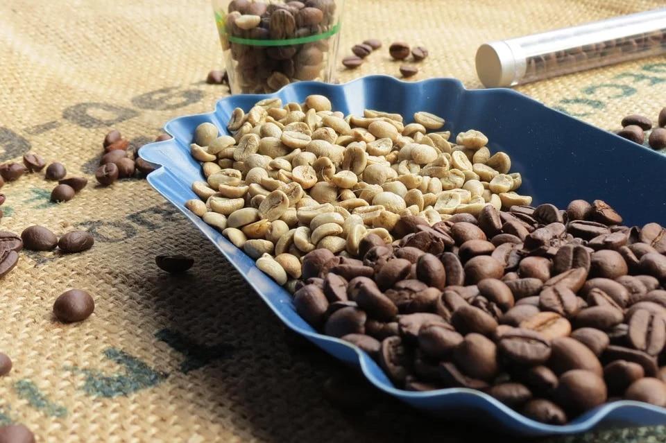 Comparaison café vert et café torréfié